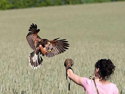 dating eagle knapper